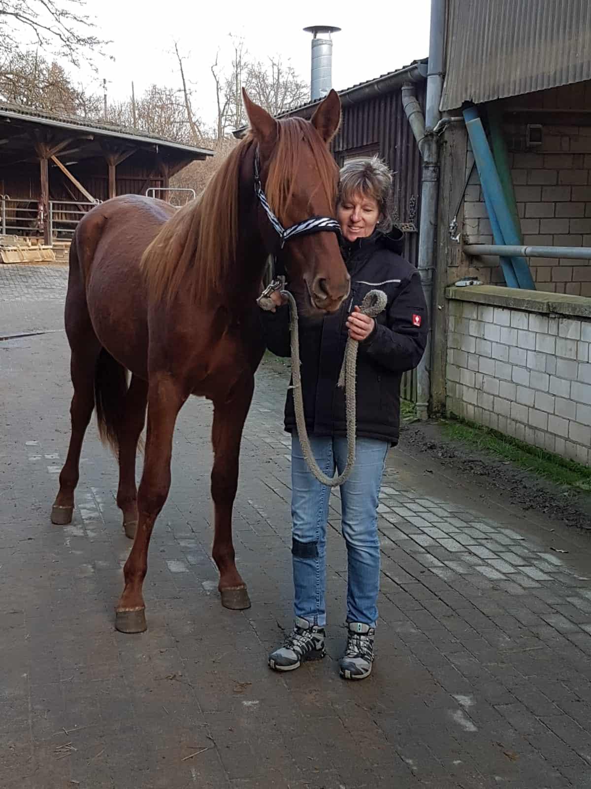 Gedeckt pferd frau von wird Vilnius: Die
